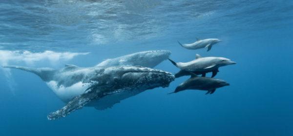 Réunion- balene