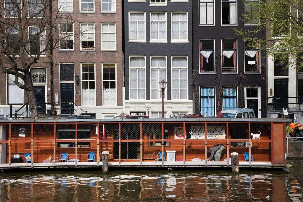 gatto-Amsterdam